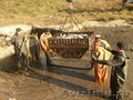 Продам живой карп 1800-3000 гг